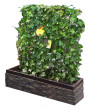 Indoor Green Living Fence